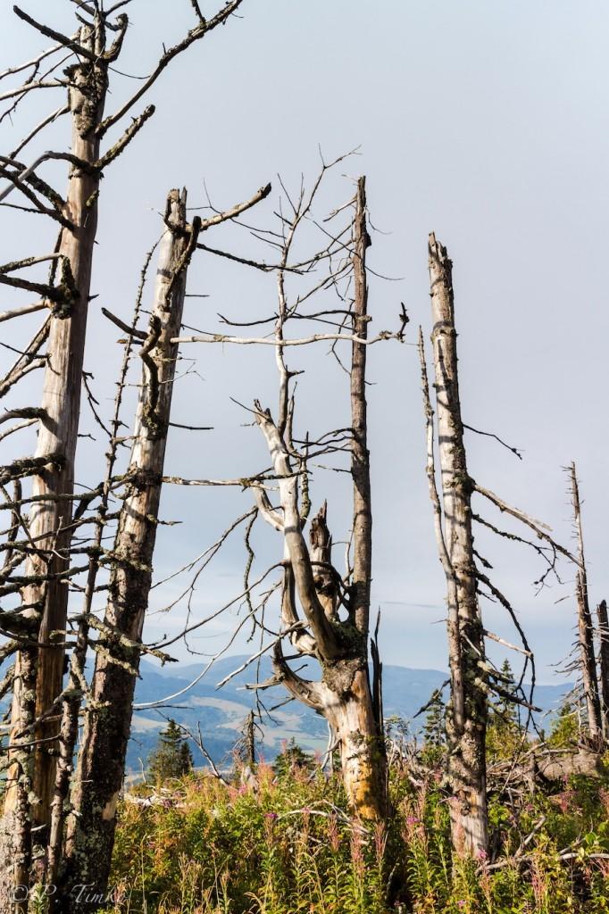 Mŕtvy les